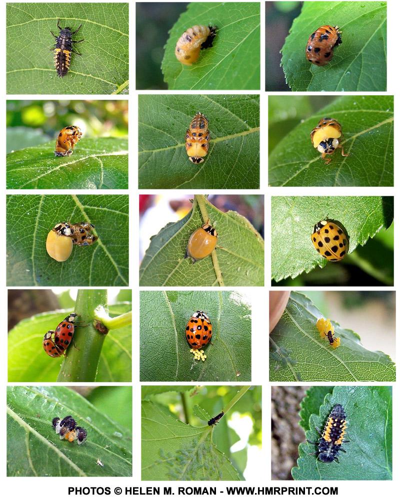 baby ladybugs u2013 don u0027t squish them