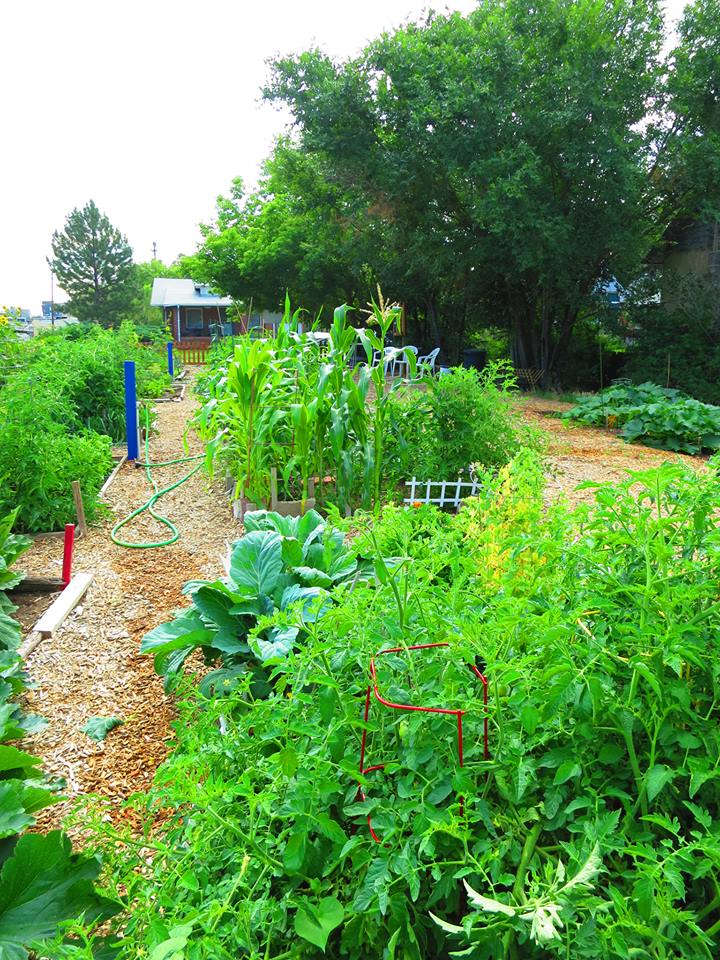 Denver Community Garden Design