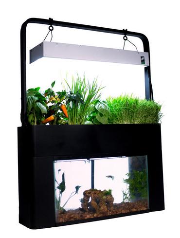 Turn a fish tank into an aquaponic garden for Aquaponics aquarium