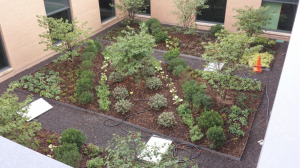 Denver Green Roof Initiative