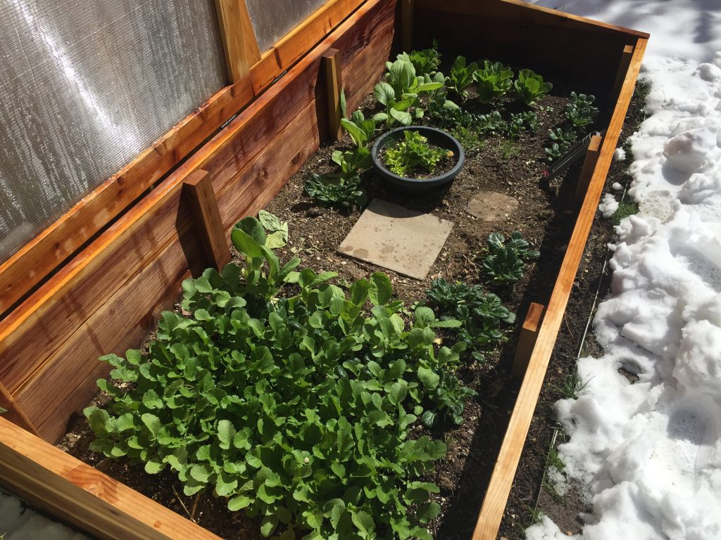Colorado Cold Frames