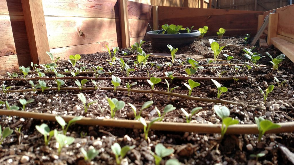 Colorado Cold Frames - Starting Seeds